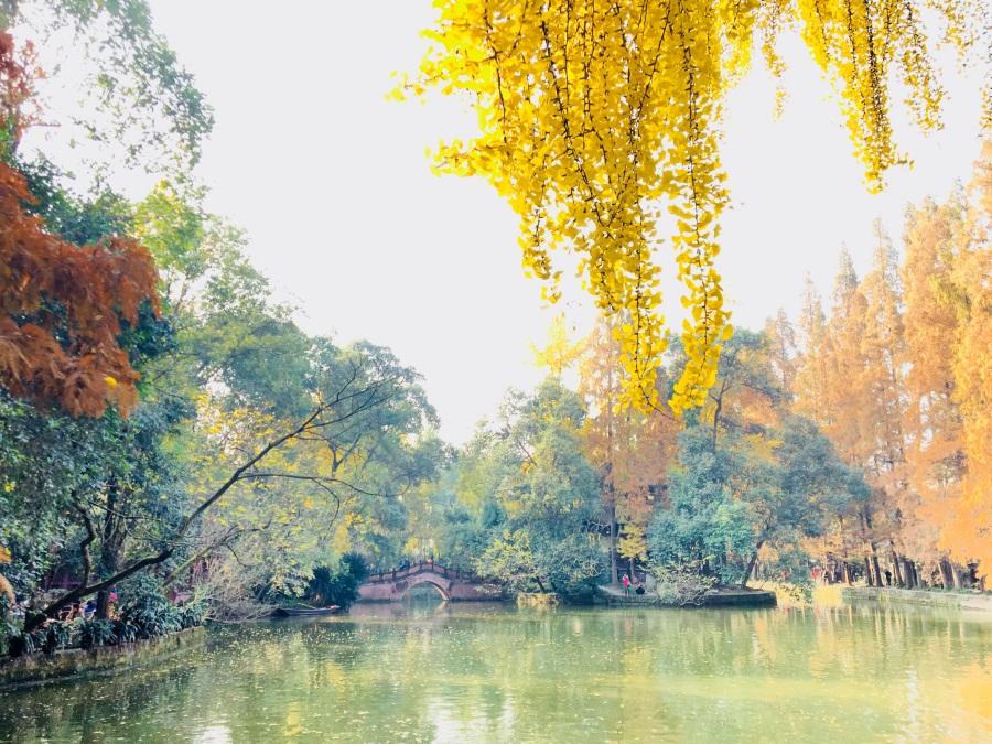 骑记:罨画池之旅,沐浴冬日暖阳,醉美银杏时光